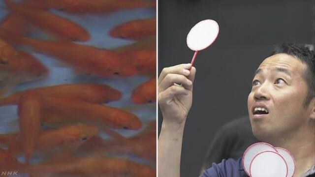 「金魚すくい」の大会 優勝は3分で67匹の金魚をすくった人