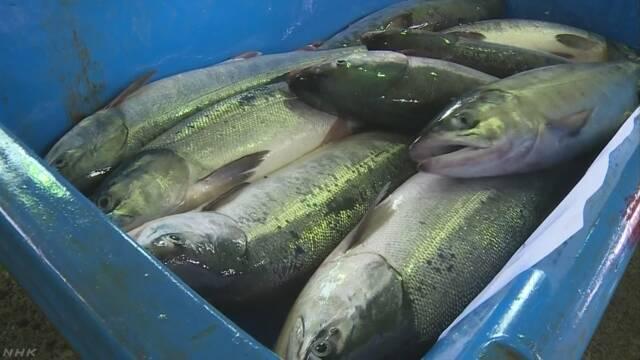 北海道えりも町 サケを取る秋の漁が始まる