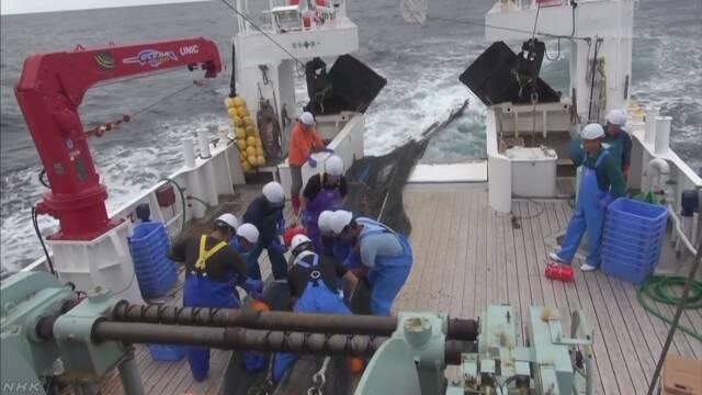 福島県 海でヒラメなどの魚が増えている