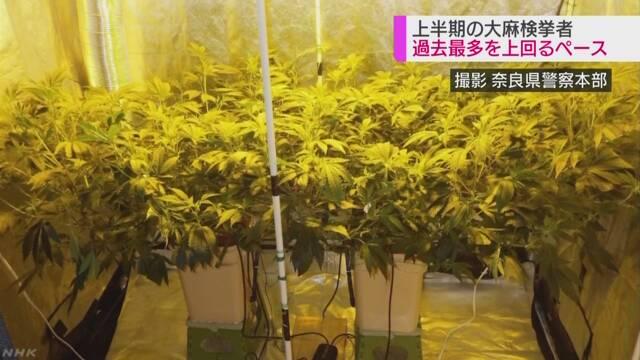 大麻を持ったりした疑いで警察が調べた人が多くなる