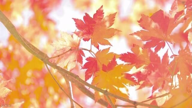 蔵王連峰で紅葉がきれいな季節