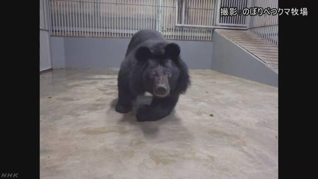 10年何も見えなかった熊の目の手術が成功する