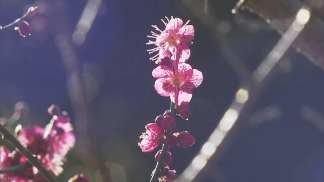 立春 関東・東海は5月中旬並みの暖かさに