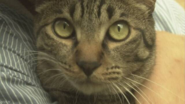 「猫は自分の名前を聞くとわかる」という研究を発表