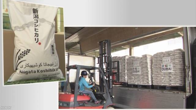 新潟県で作った米を中東のドバイに輸出する